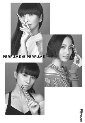 News_xlarge_perfumeofperfume_visual